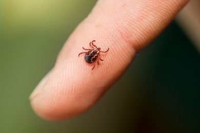 Mild winter raises risk of Lyme disease infections